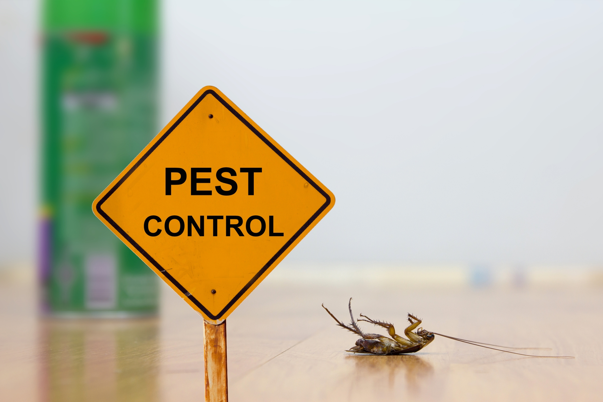 24 Hour Pest Control, Pest Control in North Cheam, Stonecot Hill, SM3. Call Now 020 8166 9746