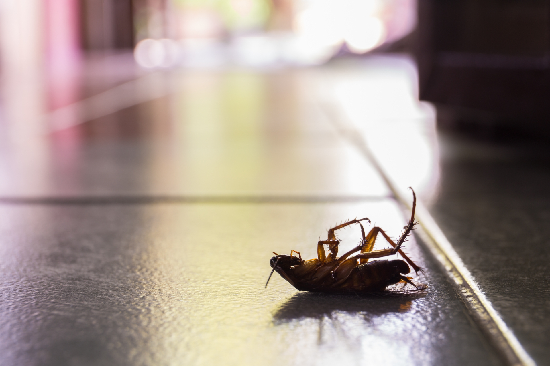Cockroach Control, Pest Control in North Cheam, Stonecot Hill, SM3. Call Now 020 8166 9746